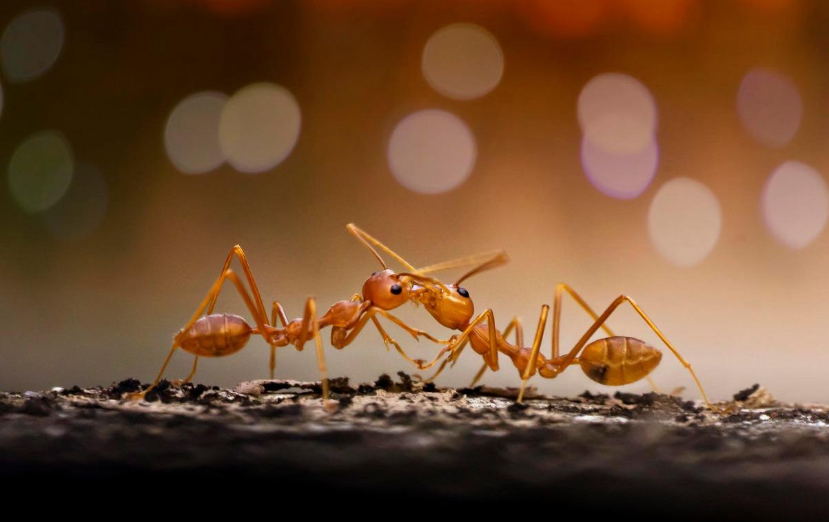 5 бързи факта за мравките