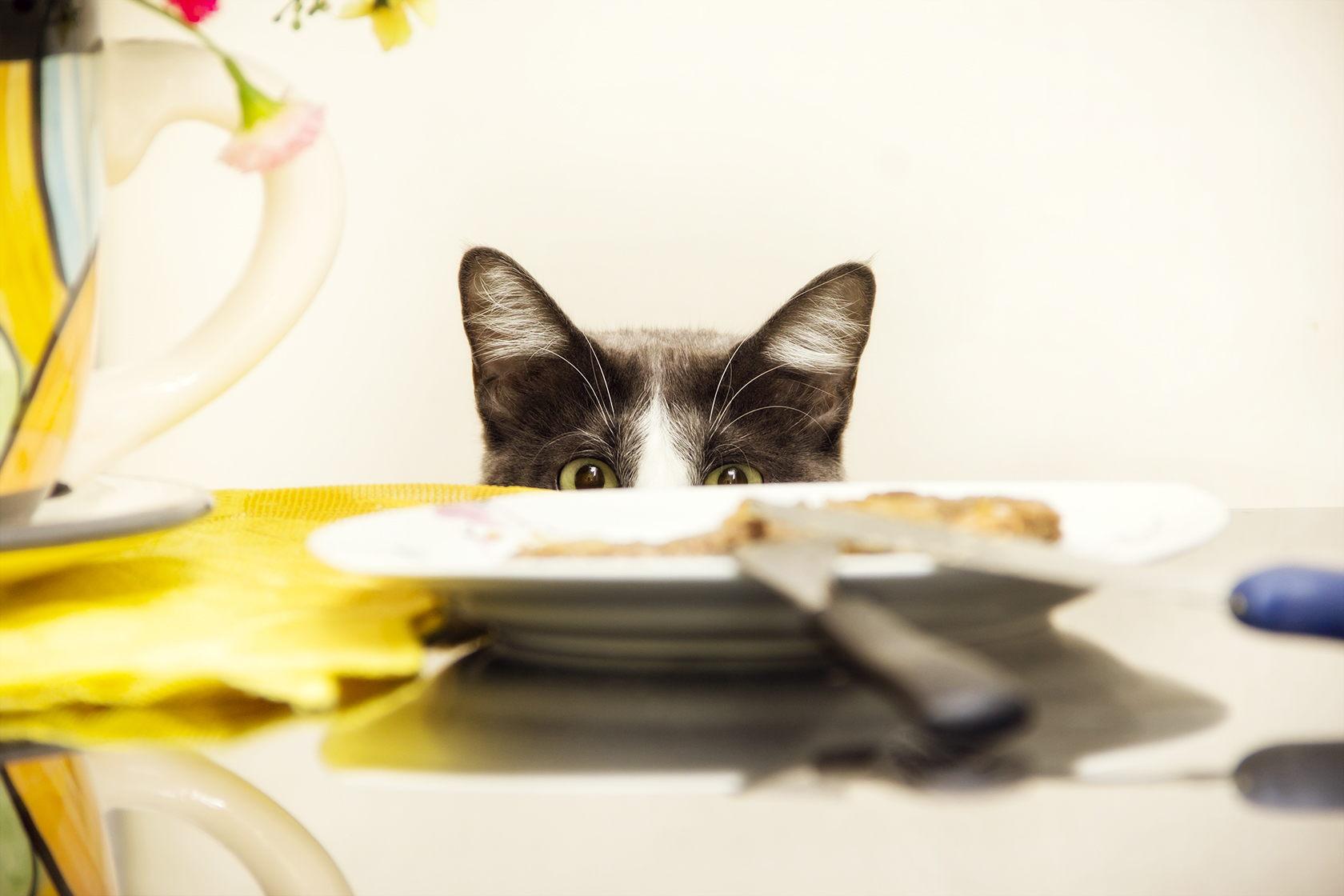 Котките могат да се пристрастят към рибата